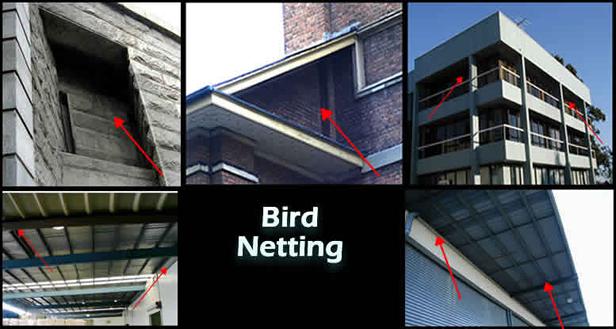 bird netting sydney